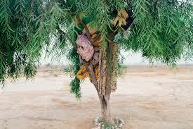Ron Amir - Quelque part dans le désert (Photographies)