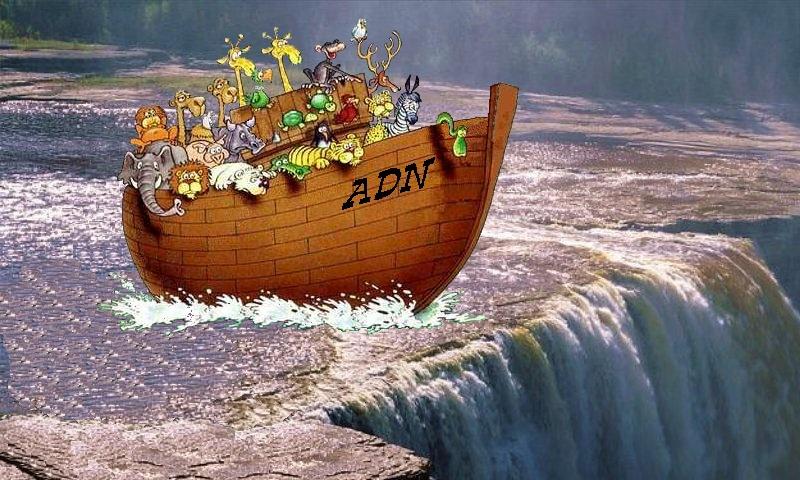 Commentaires sur la  Paracha Noah, avec Laurent Voignac