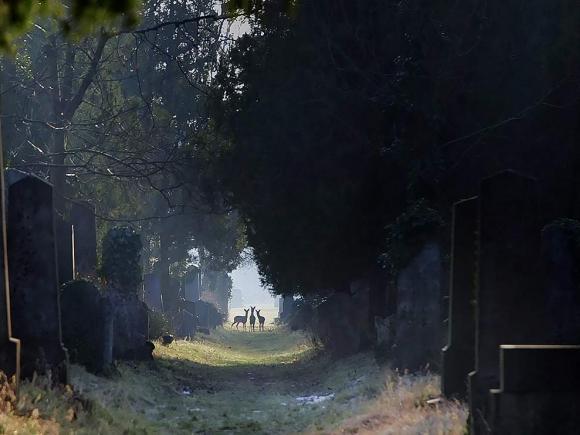 Vienne avant la nuit, de Robert Bober