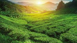 Chemini: un rapport sain à la nature