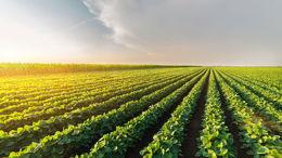 Culture et agriculture