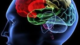 L'addiction est-elle une maladie du cerveau ?