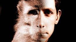 Vayikra: l'animalité sacrifiée