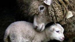 La compassion à l'égard des animaux