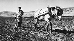 Retour à la terre: le paysan juif