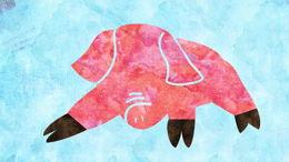 Vaet'hanan: le cochon cacher